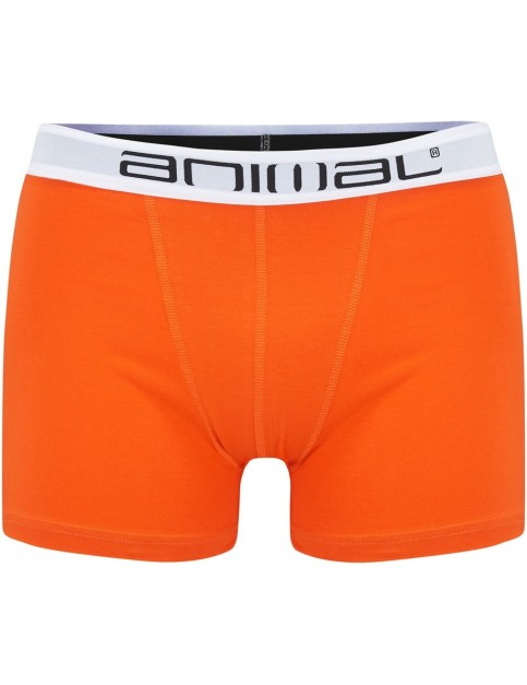 Animal Block Underwear in Assorted